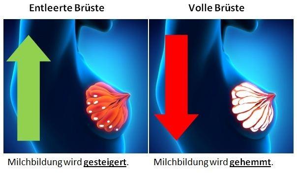 Grafik mit voller und leerer Brust