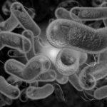 Darmbakterien im Mikroskop